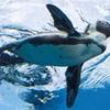 水族館 サンシャイン水族館 天空のペンギン