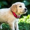 乳児がゴールデンレトリバーに噛まれ死亡 そのとき犬のキモチは?