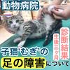 子猫むぎの足の障がいについて。診察結果!【生後3カ月】