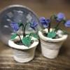 完成した植木鉢にスミレを植えてみる