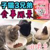 子猫3兄弟の食事風景!食欲旺盛過ぎてめっちゃ食べる!【動画あり】