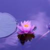 マインドフルネス(瞑想)のガイドライン「五戒」とは?