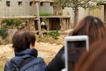 神戸市立王子動物園でジャイアントパンダやコアラを鑑賞! でもやっぱりレッサーパンダが好き。
