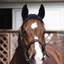 お馬blog