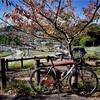 TIME Fluidity: 秋晴れの阿古谷~西峠~永沢寺~三田市小野ショートライド