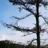 枝の少ない木