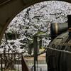 蒸気機関車(D51—522号)と「桜」