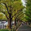 すっかり秋めいた神宮外苑と安定の美味しさの中華「竹游林」@明治記念館