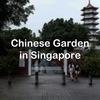 シンガポールの郊外にあるChinese Garden(中国庭園)は、入場無料で楽しめるスポットです!