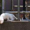爆笑猫の子育て(3)
