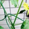 ベランダ菜園、今年のラインナップ