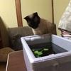 猫に襲われるミニビオトープ