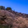 【M39】秋の桜『四季桜』と星空を撮る