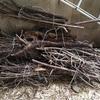 キャンプ用に薪(花桃の木)