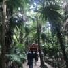 天然記念物「鬼の洗濯岩」の向こうは南国でした:青島神社(宮崎県宮崎市)