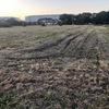 晩秋の「蓮田ひまわり畑」に行ってきました・・・