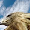 GoPro(ゴープロ)は鳥の上に乗って空を飛んでるような映像も撮れるぞっ!