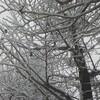 待ちに待った初雪