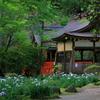 京都・上賀茂 - 上賀茂神社の花菖蒲