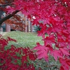金沢大学角間キャンパス紅葉