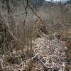 ナバ谷中央尾根から住吉道へのハイキング(その2)山伏道~ナバ谷中央尾根取り付き