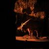 多摩動物園のナイトサファリでブラブラお散歩の巻