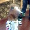 【一口馬主】ステリーナちゃん、新馬戦出馬確定。ドキがムネムネしてきた。