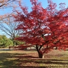 浜離宮恩賜庭園の12月紅葉