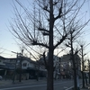 2017.12.07(Thu.)相変わらず頭痛