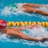 初級背泳ぎと初級バタフライ