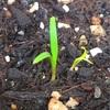 芽吹きの季節。新しいことはじめたよ!