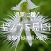 徳島の秘境:黒沢湿原 サギソウが舞う湿原