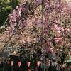 イケダハヤト氏の語る究極のモテアイテムを持ってお花見に行ってみた