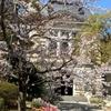 兵庫県公館とこ本日一気に桜開花しました。