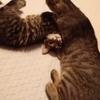 「猫の子育て」に見る、子育ての本当の意味~「子供は親の行動を見て真似ぶ=学ぶ」とはこのことか!
