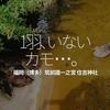 159食目「1羽、いないカモ・・・。福岡(博多)筑前國一之宮 住吉神社」福岡ご当地