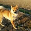 行きたい所に行く!自由奔放な犬の散歩~散歩ってこんなに大変だっけ?!