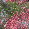 大和は国のまほろば。たそがれの紅葉と奈良の甘いひととき。