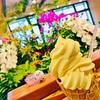 【風間担のJGC修行】35レグ目 宮崎~福岡 王道路線で宮崎空港の定番ソフトを味わう