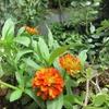 6月の小さな庭