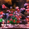 レゴランド「シーライフ」は、魚とたわむれる空間です。