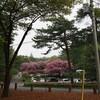 花の見頃を迎えた赤城自然園は群馬県の穴場だと思う話