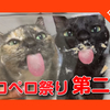 【猫のペロペロ祭第2弾!開催中!】