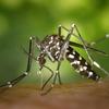 蚊の対策に最新のオススメグッズ!これでやっと熟睡できる。