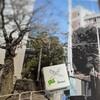 遅咲き桜のバトン前線〜開成併願校に端を発する補欠繰り上げ合格