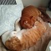 【癒やし】猫のかわいさで免疫力アップ
