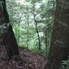 勝俣部長の健康体質作り・・・・高尾山「健康を体感する」(256)