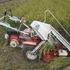 クボタのコンバインで「コシヒカリ」「ヒノヒカリ」の稲刈り