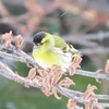 野鳥日記 2020年3月3日 真駒内公園