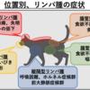 猫のリンパ腫③~症状~